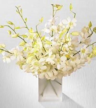 Winter White Orchids