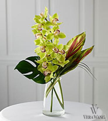 Cymbidium orchid Tropical foliage