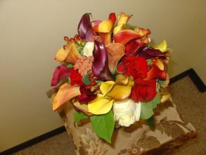 Mix color mini calla
