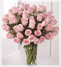 48 beautiful Long pink roses