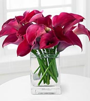 Mini calla Hot pink in vase
